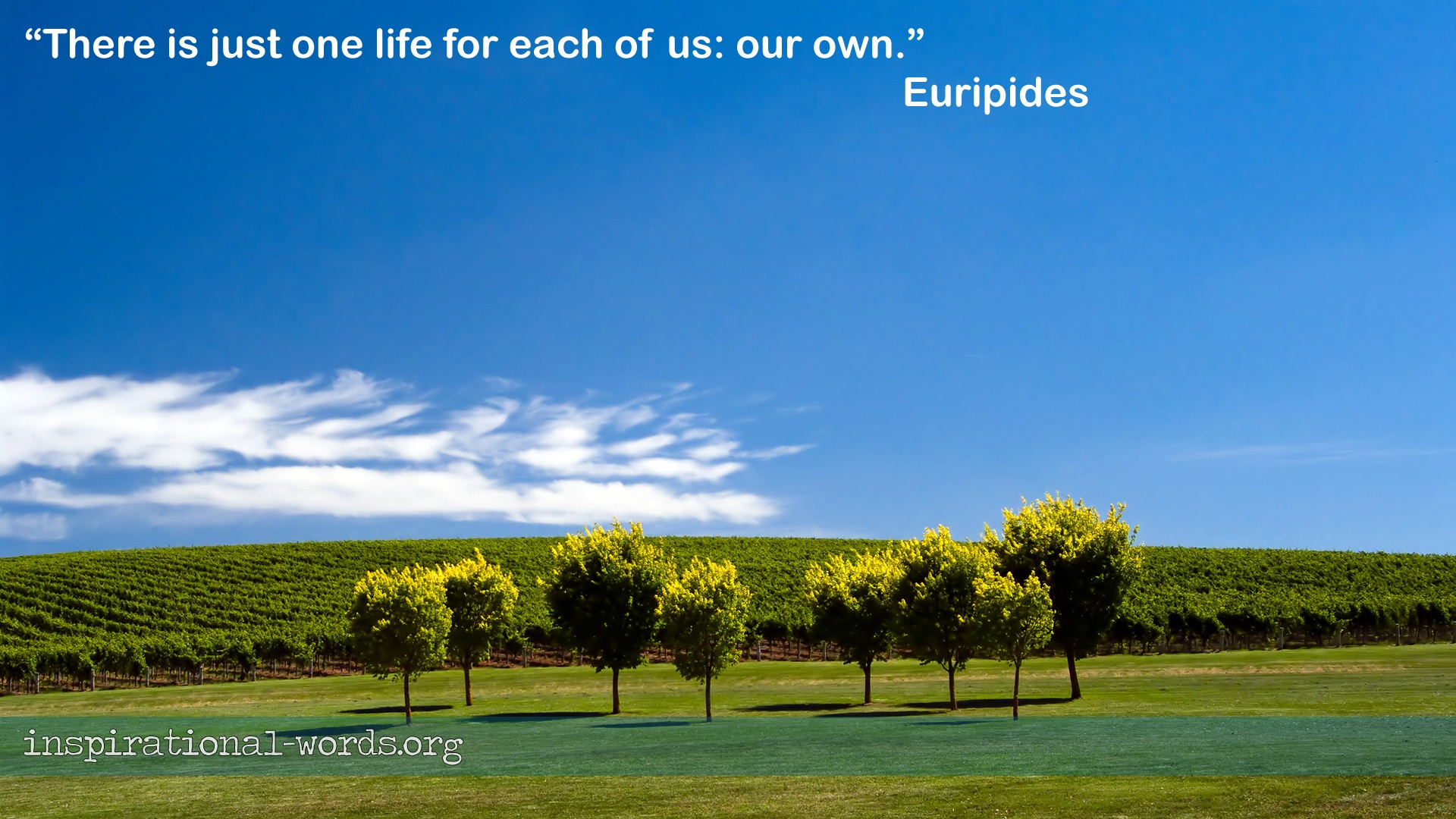 Euripides inspirational wallpaper