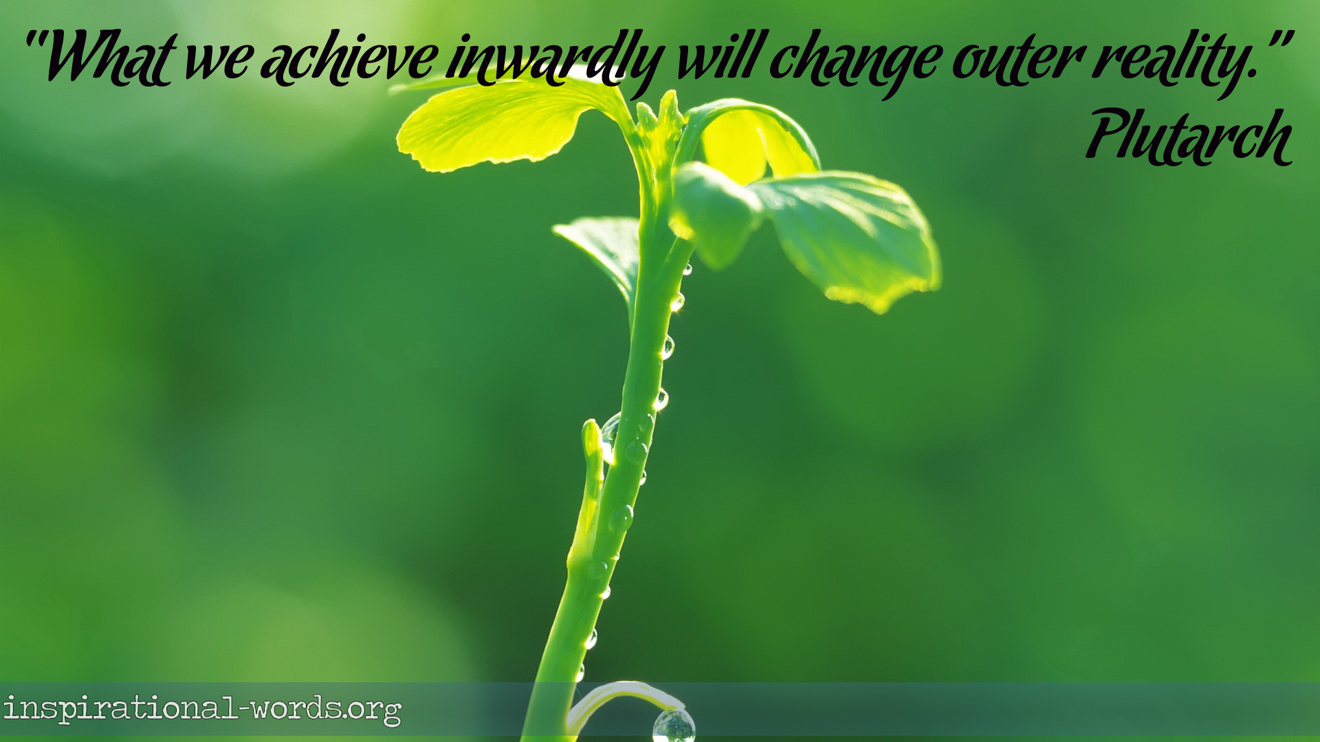 Inspirational Wallpaper Quote by Plutarch