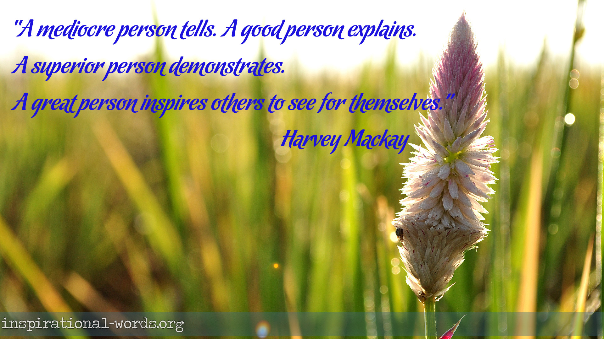 Inspirational Wallpaper Quote by Harvey Mackay