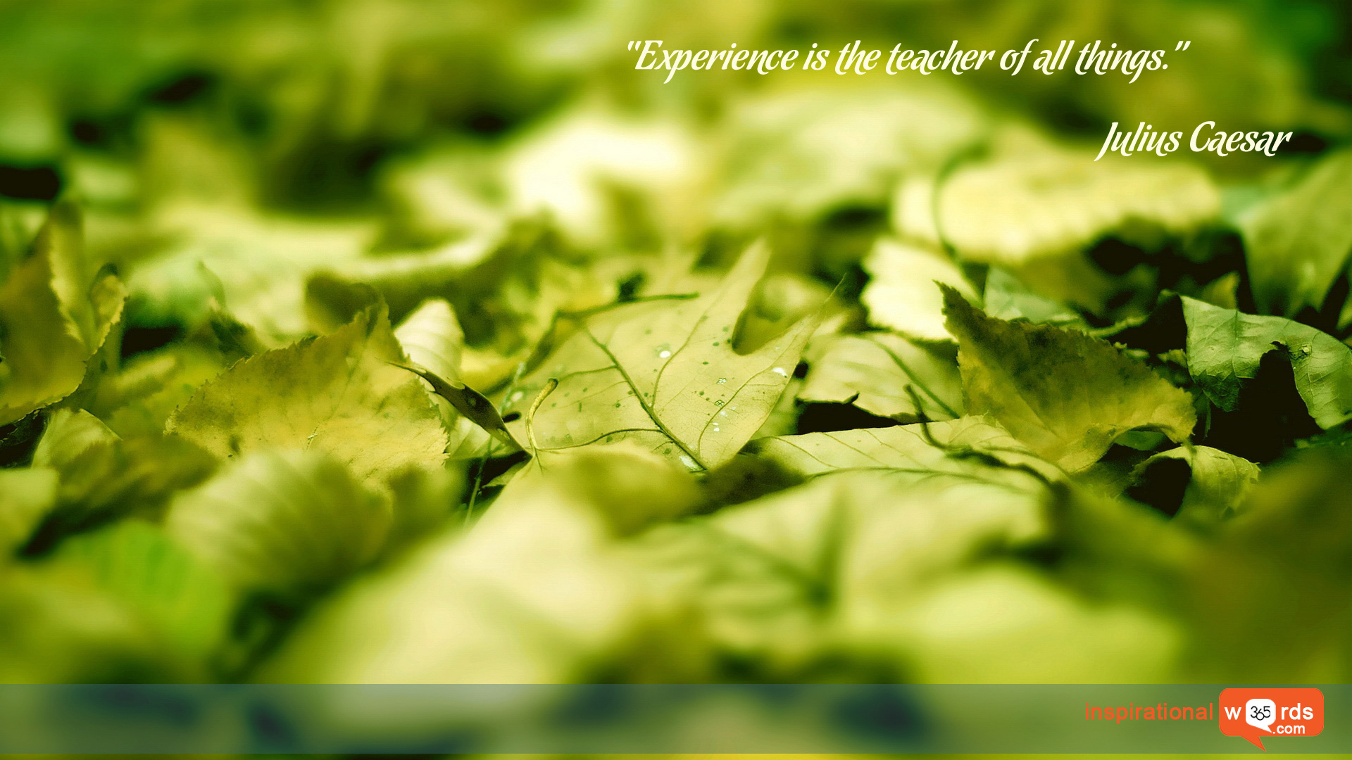 Inspirational Wallpaper Quote by Julius Caesar