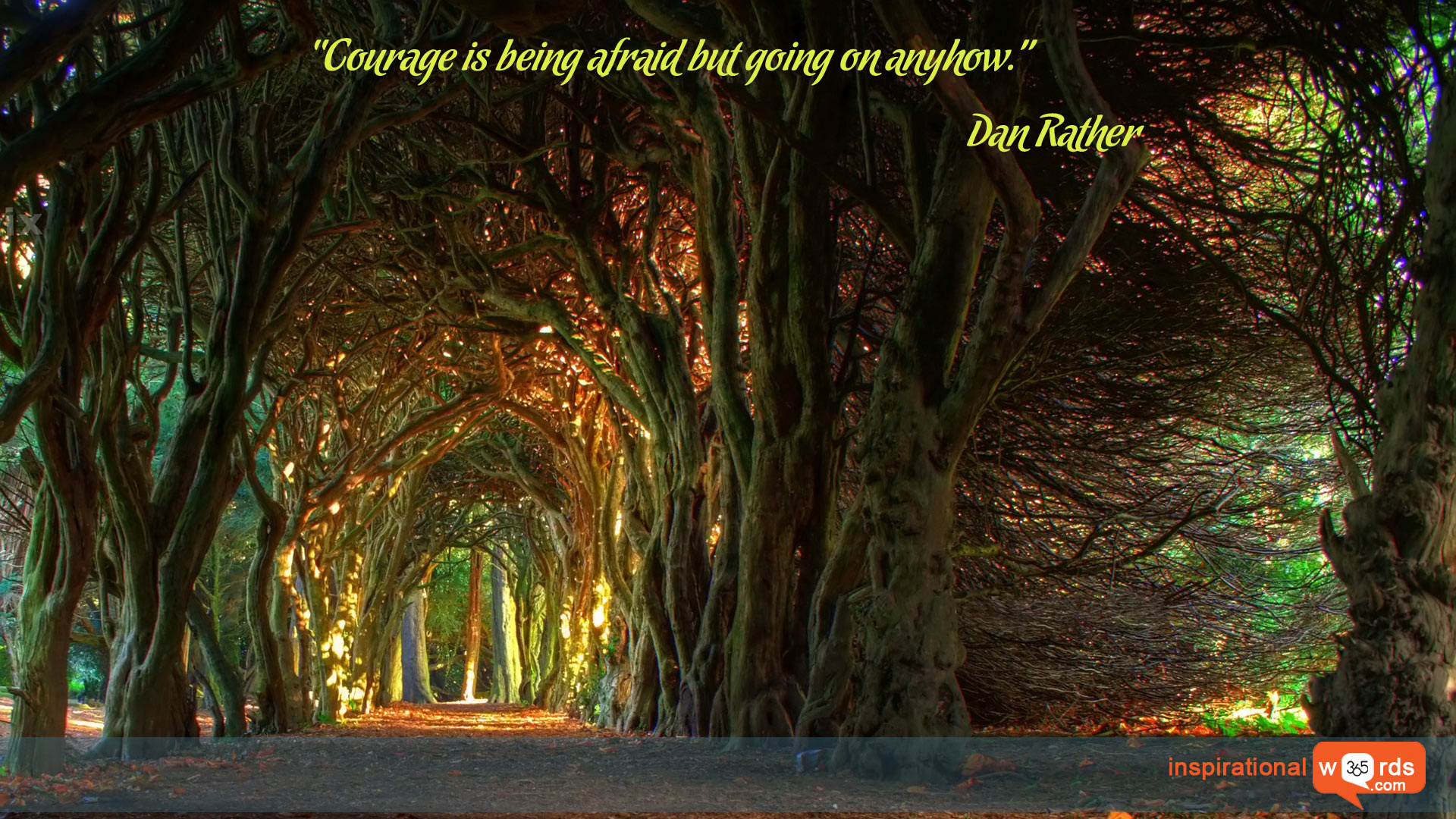 Inspirational Wallpaper Quote by Dan Rather