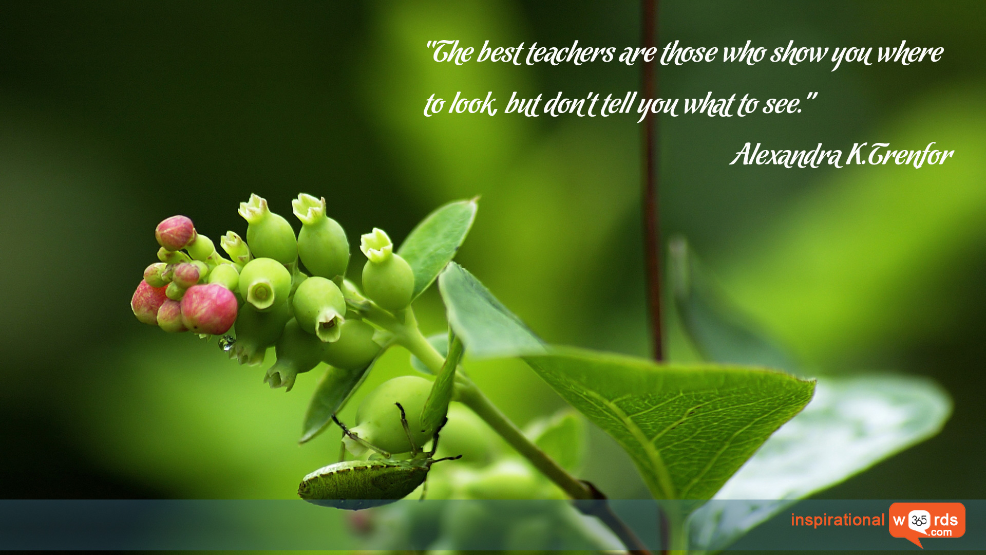 Inspirational Wallpaper Quote by Alexandra K.Trenfor