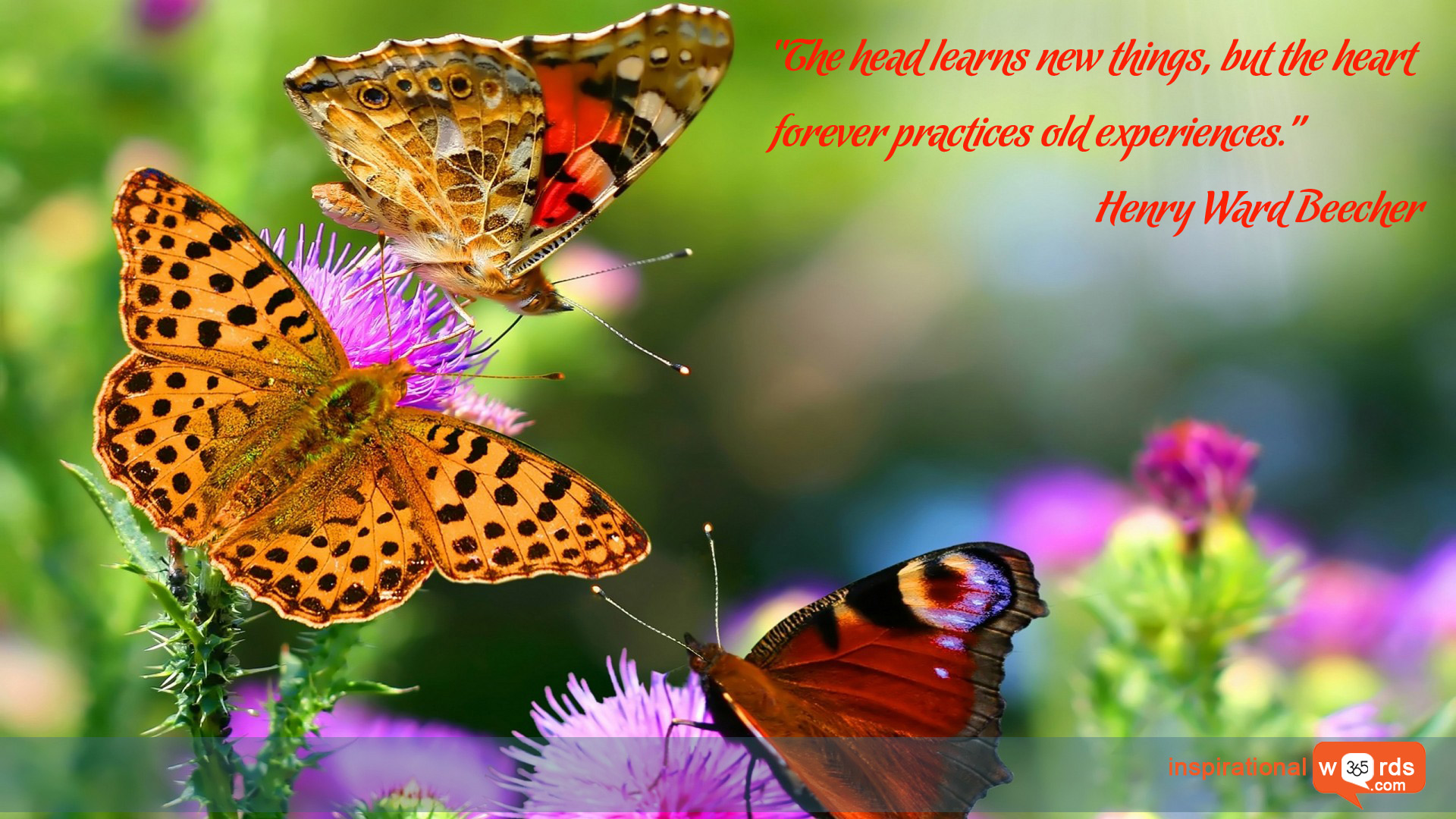 Inspirational Wallpaper Quote by Henry Ward Beecher
