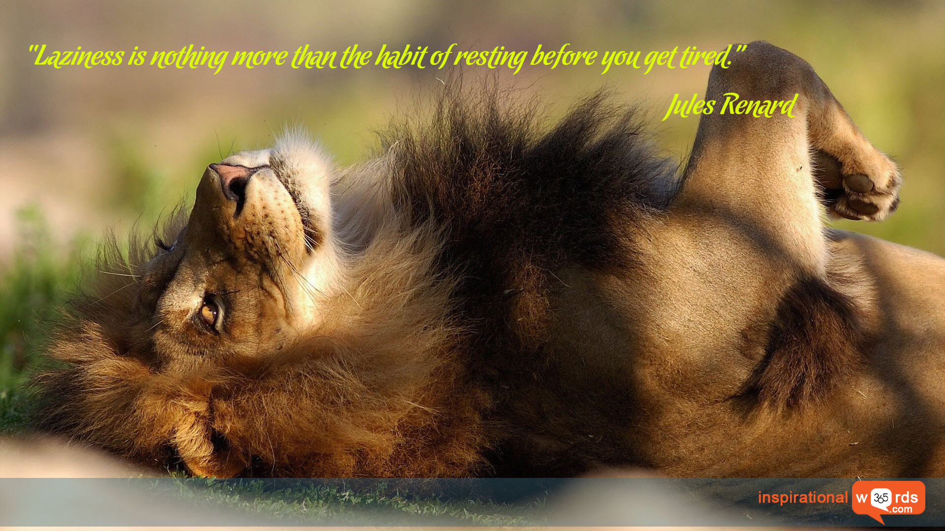 Inspirational Wallpaper Quote by Jules Renard