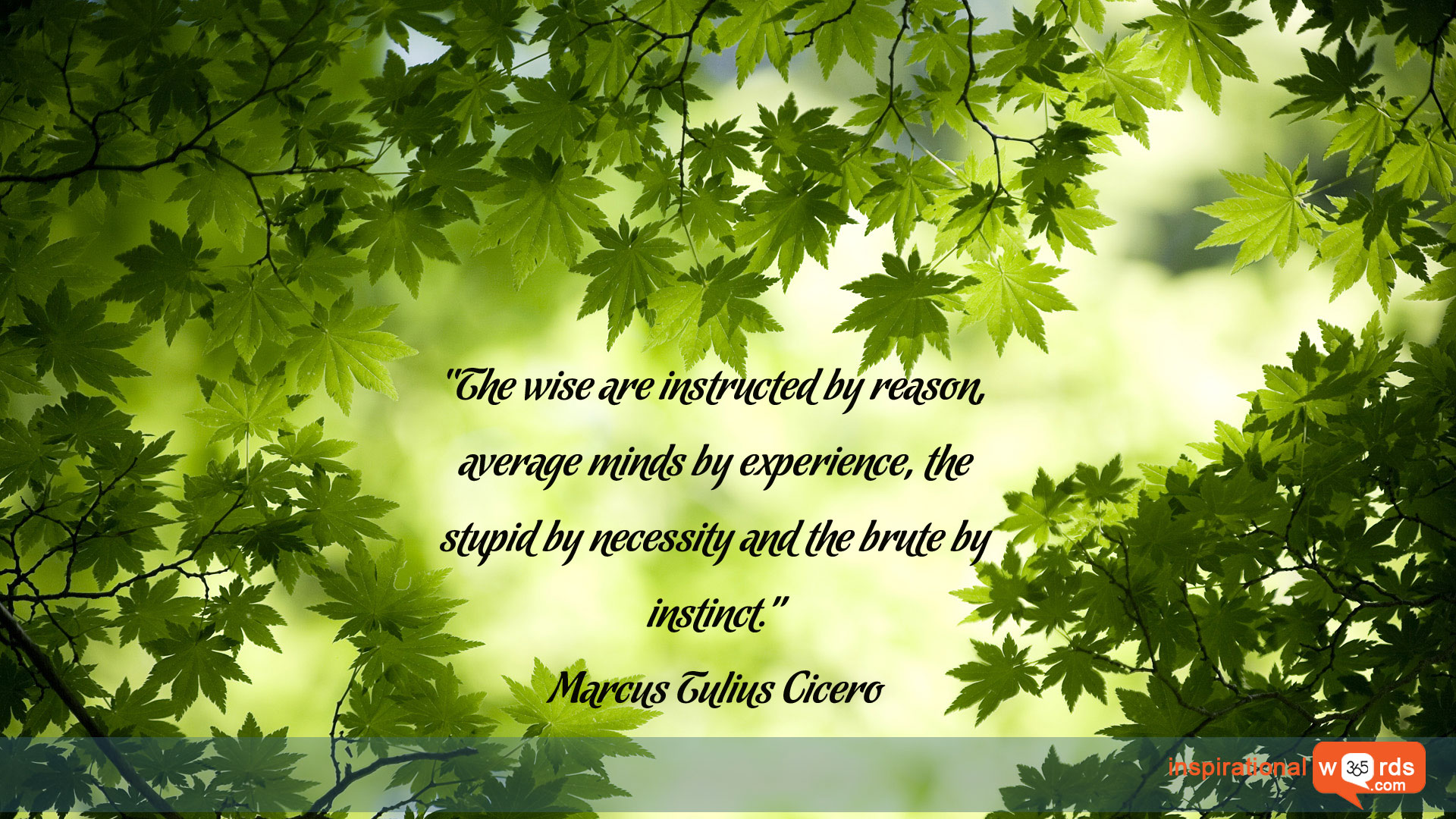 Inspirational Wallpaper Quote by Marcus Tulius Cicero