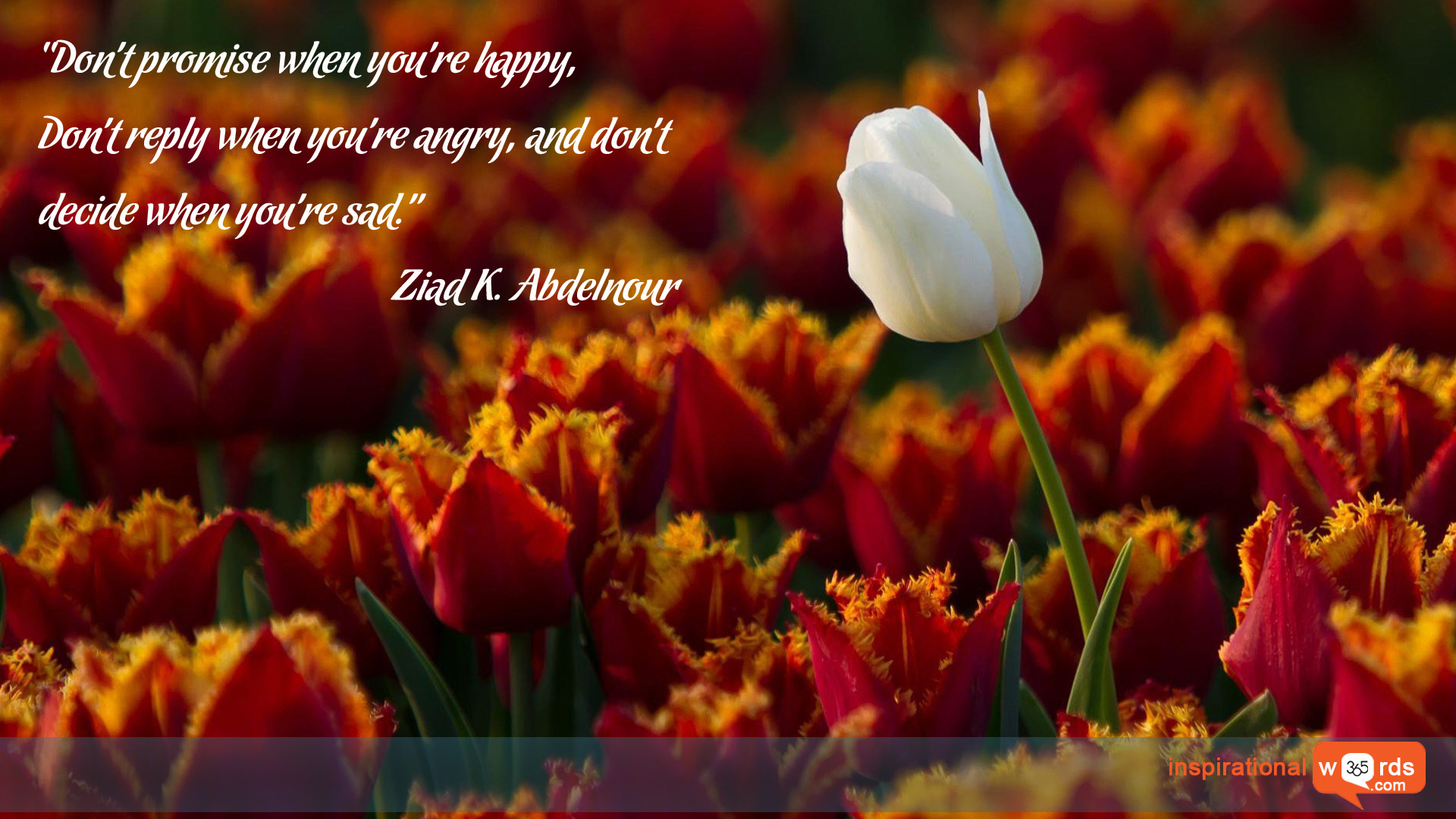 Inspirational Wallpaper Quote by Ziad K. Abdelnour