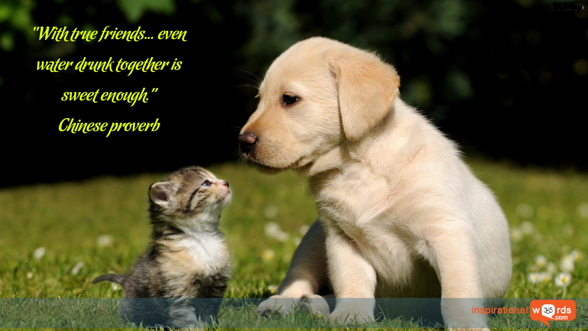 Inspirational Wallpaper Quote. Chinese Proverb
